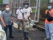 Pradeep Kumar X (51) asal India akhirnya ditangkap tim Satpol PP Kota Denpasar, Kamis, 8 April 2021 - foto: Istimewa