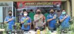Pohon Ganja Hidroponik di Brebes 'Ditebas' Polisi, 4 Pelaku Ditangkap