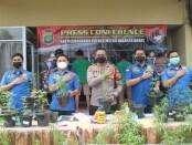 Ratusan pot pohon ganja yang ditanam secara hidroponik diamankan oleh Satuan Narkoba Polres Metro Jakarta Barat - foto: Istimewa