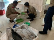 Pangkalan TNI Angkatan Laut Palembang mengagalkan penyelundupan lebih 55 ribu ekor benur atau benih lobster di pelabuhan ilegal Karang Baru, Muara Telang, Kabupaten Banyu Asin, Sumatera Selatan, Kamis (5/8/2021) - foto: Istimewa