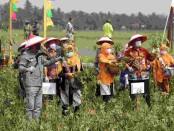 Bupati Purworejo Agus Bastian saat melakukan panen raya kacang hijau di Desa Dlisen Wetan, Kecamatan Pituruh, Kamis (30/09/2021) - foto: Sujono/Koranjuri.com